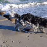 Emil am Meer
