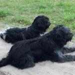 Bootsmann und Emil, der Junghund